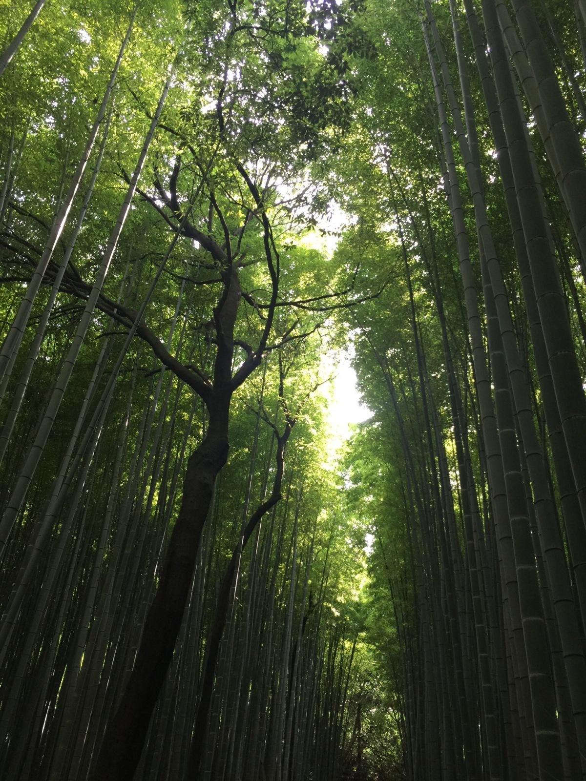 The Magical Kyoto, Japan. www.tracingabby.com